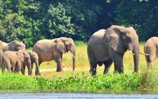 5 Days Uganda Gorillas & Wildlife Safari