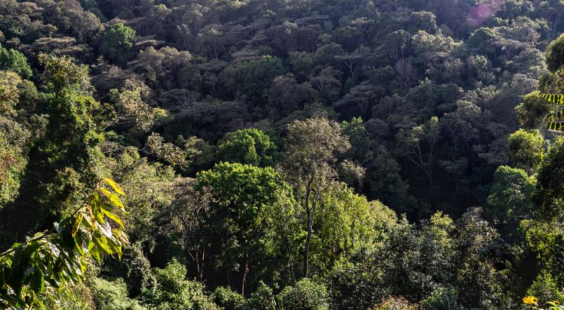 Accessing Bwindi Impenetrable National Park
