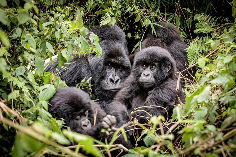 3 Days Bwindi Gorilla Trekking