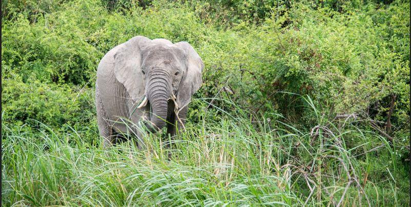 3 Day queen Elizabeth national park safari