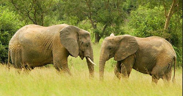 5 Days bwindi and queen elizabeth park safari