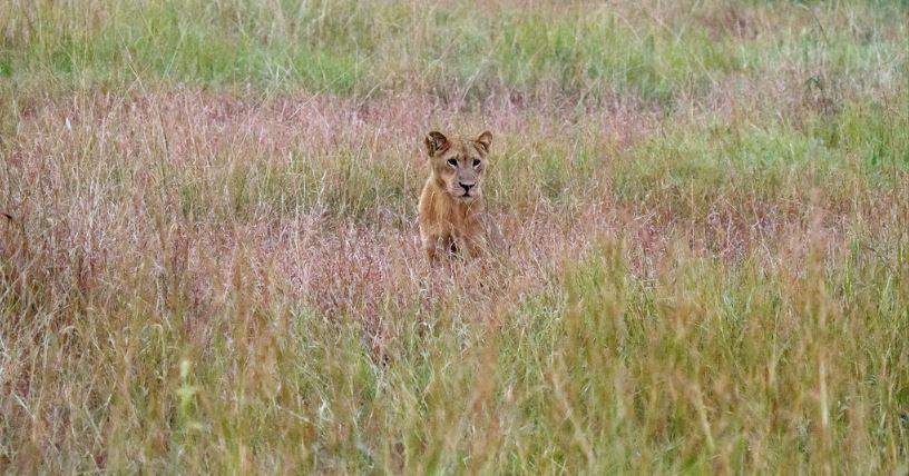 3 Day queen elizabeth park safari