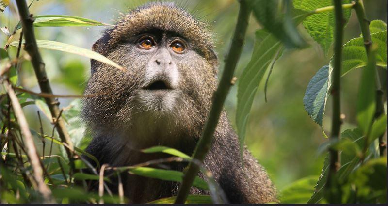 6 Days Rwanda Uganda safari