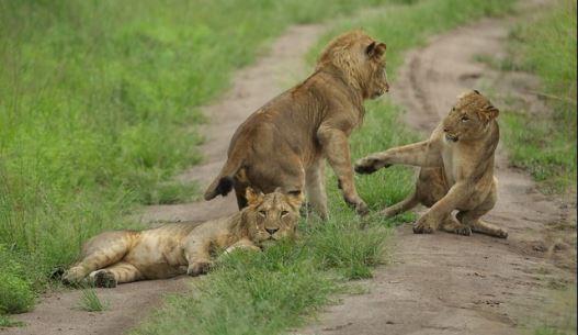 10 Most breathtaking national parks inUganda