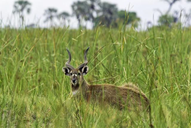 katongo wildlife reserve
