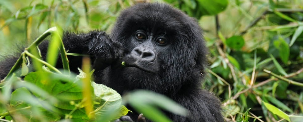 Activities while  on  Uganda safari