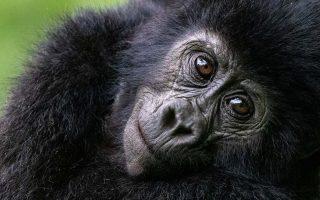 Budget Gorilla Tours
