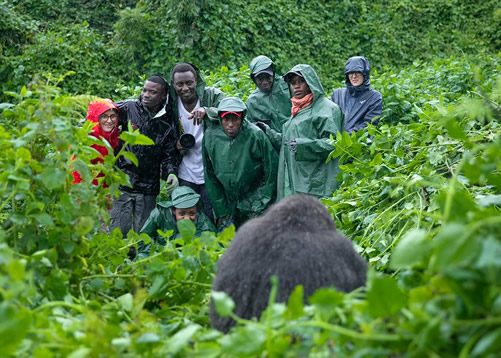 Why is Gorilla Trekking so Expensive?