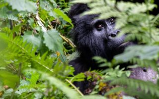 7 Days Best of Uganda adventure from Kigali