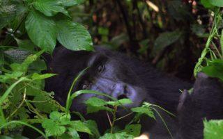 8 Days Uganda Wildlife & Primates Safari