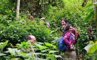 Walking Safaris in Bwindi Impenetrable National Park