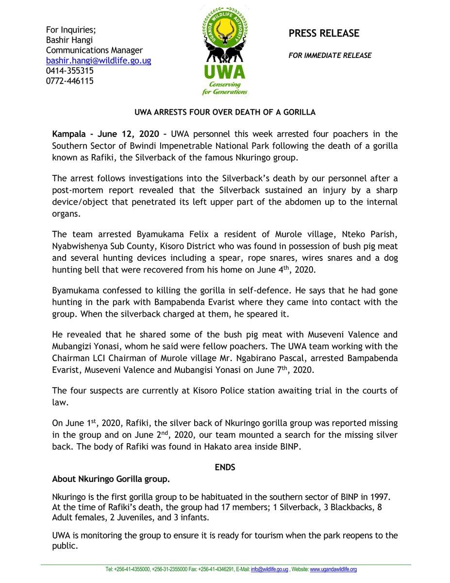 Silverback Rafiki Killed by Poachers in Bwindi