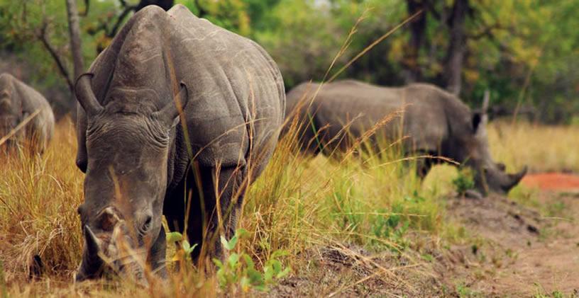 Uganda Savannah Parks Re-Open Amidst Global Pandemic