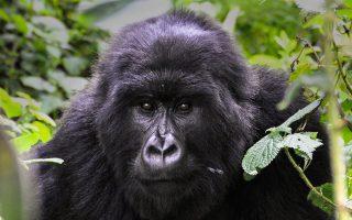 16 Days Uganda Safari Adventure Tour