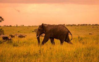 7 Days Bwindi Gorillas & Serengeti Wildlife Safari