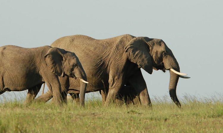 7 Days Best of Nyungwe and Akarega Safari