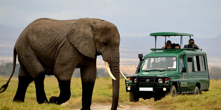 Day Game drive