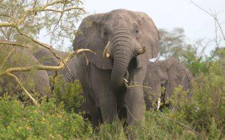 10 Days Rwanda Uganda Safari