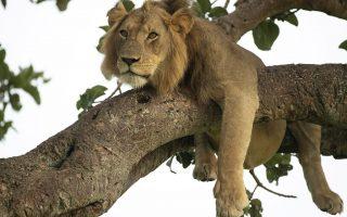 9 Days Uganda Rwanda Adventure Safari