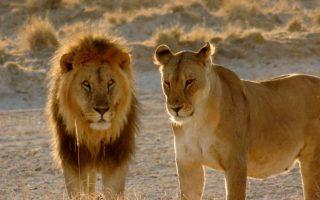 13 Days Rwanda Uganda Safari tour