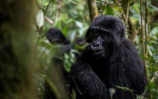 5 Days Uganda Gorillas and Wildlife Safari