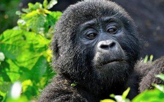 5 Days Uganda Wildlife & Gorillas safari from Rwanda