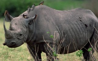 10 Days Uganda Wildlife & Primates Safari