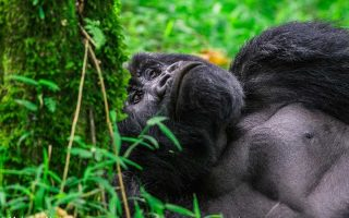13 Days Uganda Congo Adventure