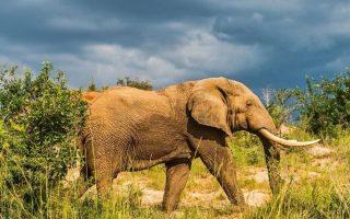 5 Days Rhino Trekking, Murchison falls, & Semliki wildlife safari