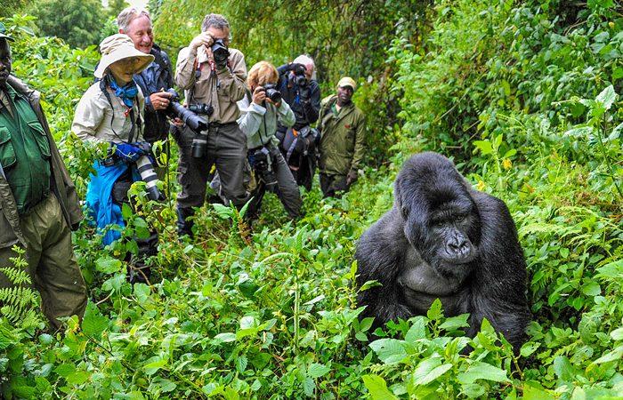 5 Days Gorillas and Wildlife